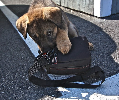 Camera Bag Theft 02