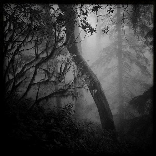 Trees in Fog on Humbug Mountain