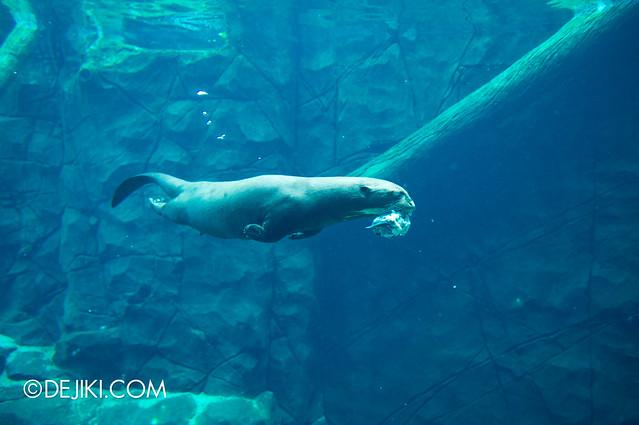 River Safari - Giant River Otter