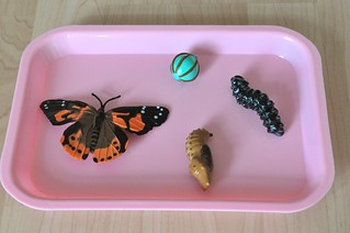 Life Cycle Butterfly