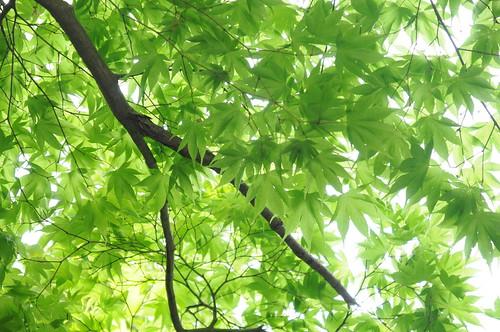 緑 #京都嵐山