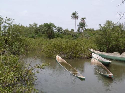 Los manglares de Makasutu (Gambia)