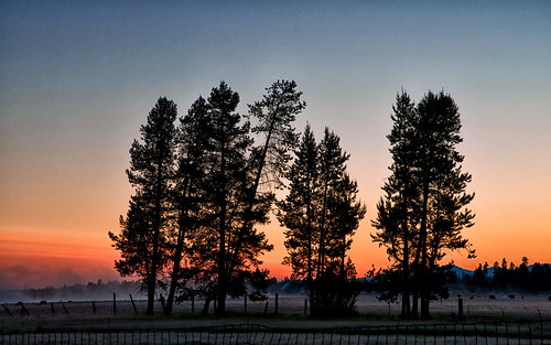 trees orange nature oregon sunrise landscape day northwest scenic clear