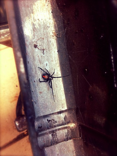 Redback comes to the party