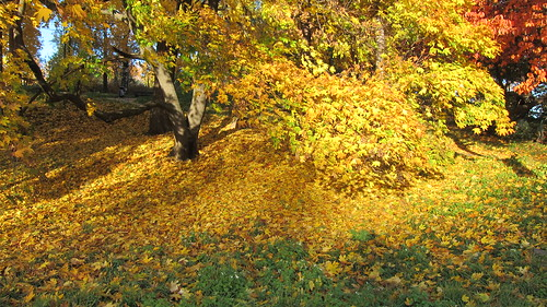Golden autumn in Helsinki by Anna Amnell