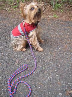 Tucker Ridgerunner paracord leash (3)