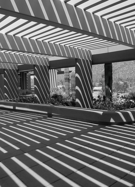Yipes Stripes, Saguaro National Park Visitor Center