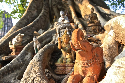 little shrines placed at the root of a tree in Wat Si Sawai