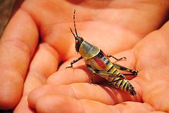photo-grasshopper