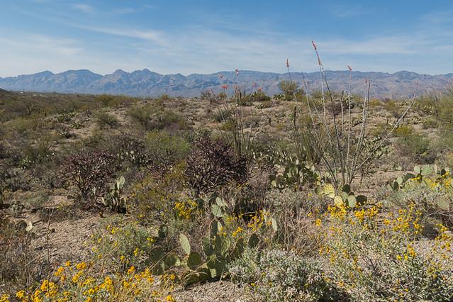Sonoran Desert, Saguaro National Park