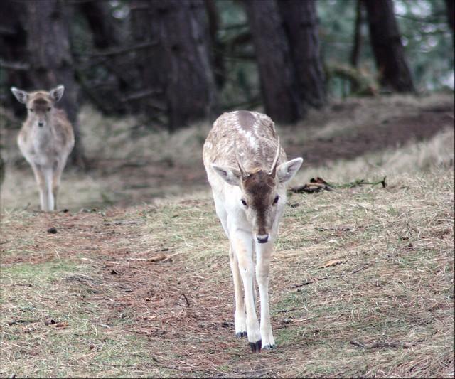 Header of herten