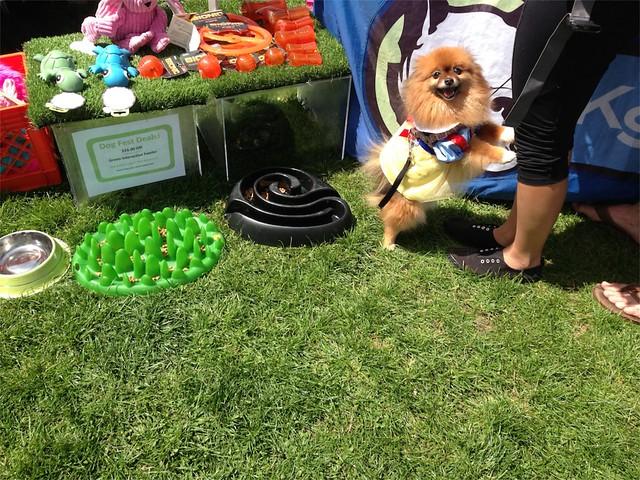 Duboce Park Dog Fest