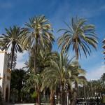 Palm Trees, Elche