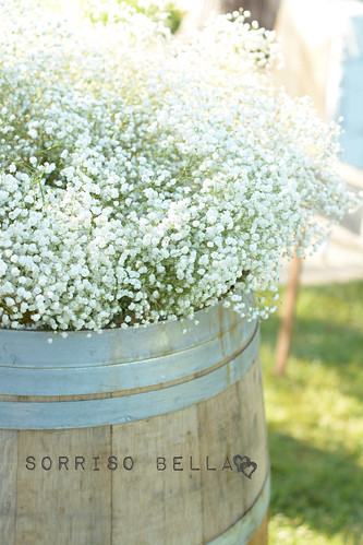 Barrel of baby's breath