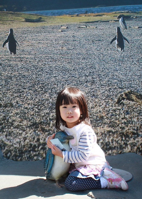 130324 B & Little Blue Penguin