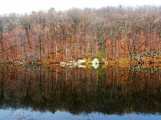Late Fall Reflection