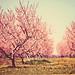 springtime dream by MarianneLoMonaco