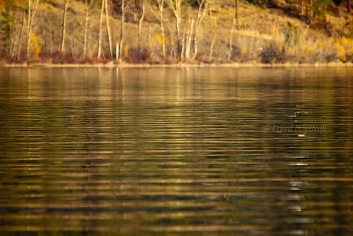 trees brown canada green nature water yellow reflections landscape reflecting golden bc okanagan shoreline lakes