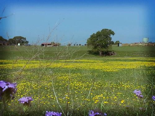 wildflowers flickrandroidapp:filter=tokyo