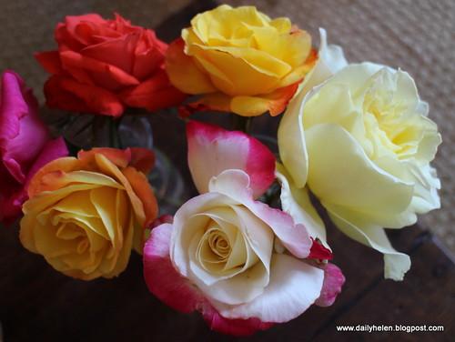 dailyhelen_blooms by dailyhelen
