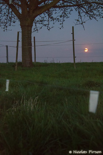 trees sunset sky moon tree nature grass night countryside nightshot country meadow cable rope fullmoon moonlight prairie grassland stake redmoon