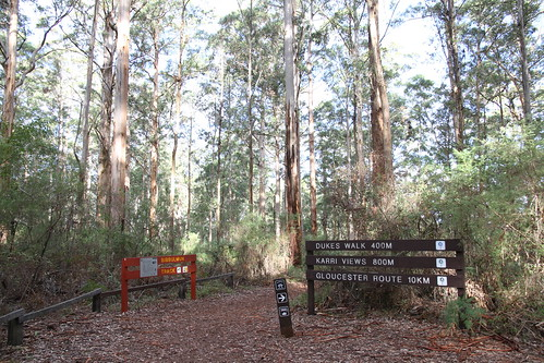 Pemberton - Gloucester Tree - Easy-Peasy, Easy, Teeth-Gritting, or Insane