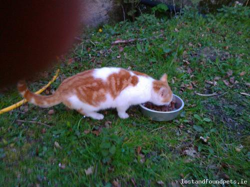 Tue, Apr 30th, 2013 Found Male Cat - Knockcroghery Village, Knockcroghery, Roscommon
