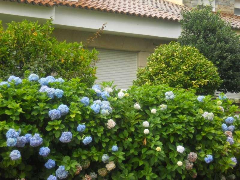 Jardineros en acci n plantas alrededor de la casa for Plantas para poner cerca de la piscina