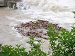 Trostberg-Hochwasser Alz-Juni 2013-Wehrbau-Treibholz Strudel