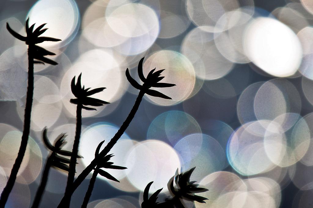 IMAGE: http://farm9.staticflickr.com/8543/8991206413_7928a7f441_b.jpg