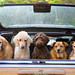 of-dogs-dog-wallpaper-animal-planet-ibackgroundzcom by clairefraser1505