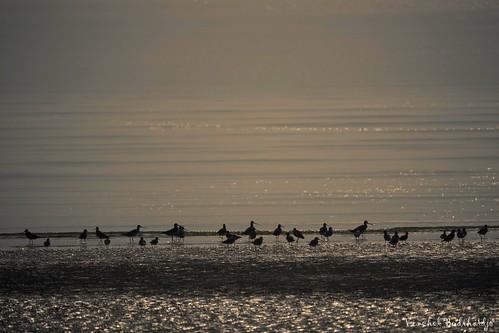 malaysia mersing outdoor nature wildlife animal fuji xt2 100400mm bird shorebird