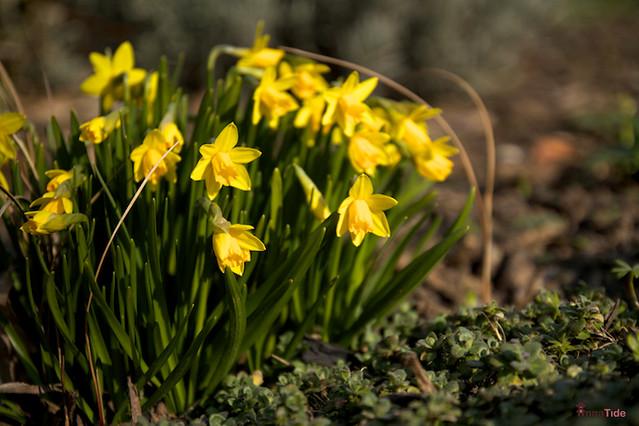 spring-time - 01.04.2013 (11)
