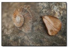 wood(0.0), seashell(0.0), fauna(0.0), invertebrate(1.0), fossil(1.0),