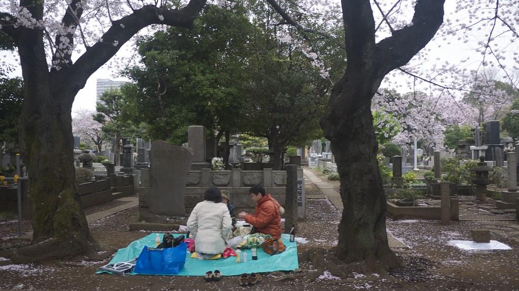 Cemetery Sakura