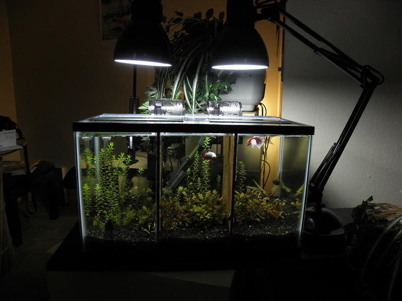 3 way divided betta tank the planted tank forum for Divided fish tank