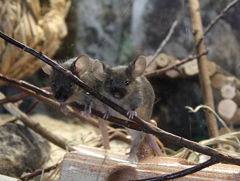 hiiret2
