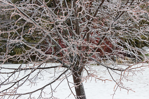 Ice Storm: Tree of Ice