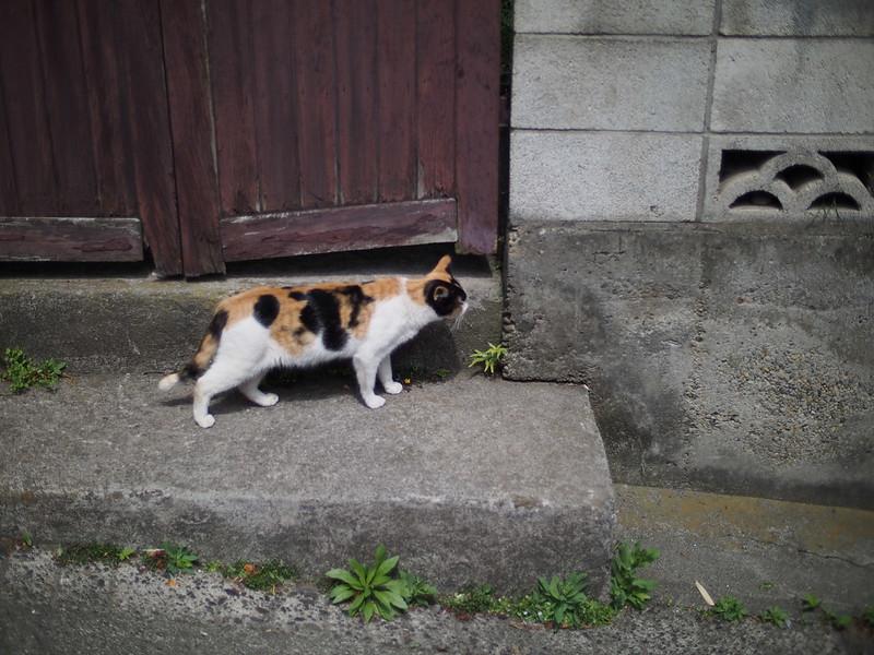 Cat in Tokyo, 東京の猫
