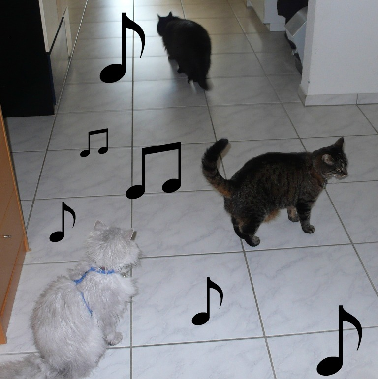 3 cats with music