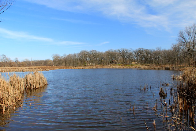 Lincoln Marsh, Mid Spring, 2013