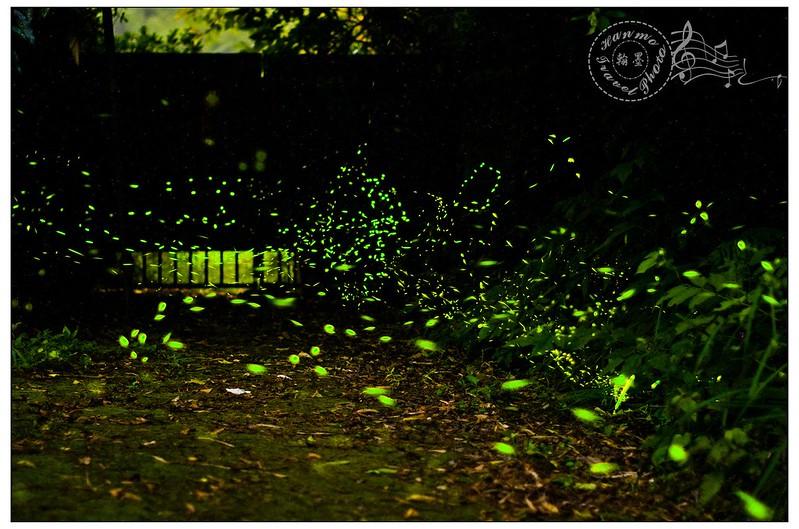 三義螢火蟲