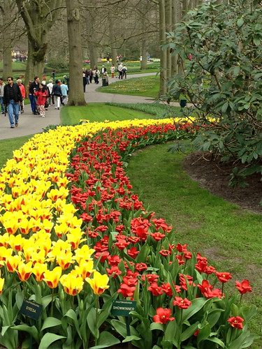 Keukenhof - yellow & red tulip bed