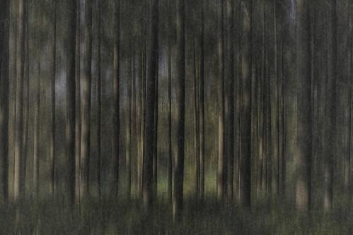 trees green amsterdamsebos amstelveen