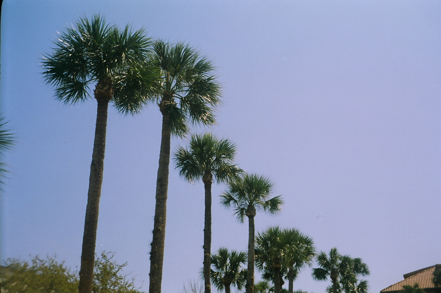 on film: trip to florida