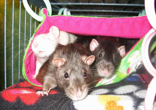 Gizmo, Bug and Merlin