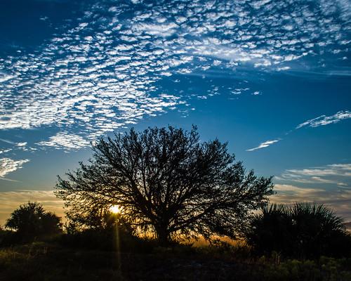 sunrise landscape florida sarasotacounty stateroad72 treeprofile dudrow