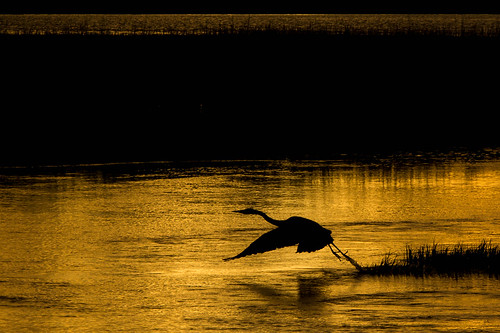 sunset black bird heron water sunrise nikon bombayhook