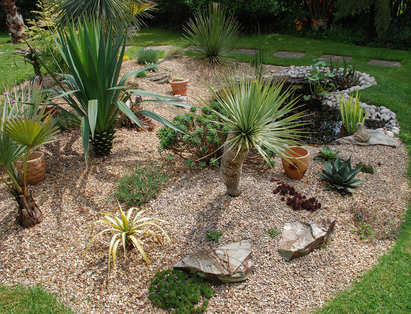pushing the borders � view topic yucca failure and success