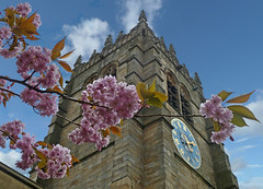 Blossom at Bradford Cathedral